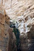 Ein avdat canyon, Israël — Photo