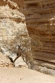 Ein Avdat Canyon, Israel — Stockfoto