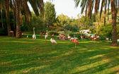 Strolling pink flamingos — Stock Photo