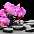 Orchid - 