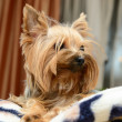 Small dog — Stockfoto #9689346