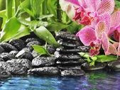 Orchidea rosa — Foto Stock