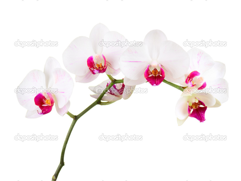 Orchid on the white background — Stockfoto #9689266