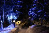 árboles de invierno bajo iluminación — Foto de Stock