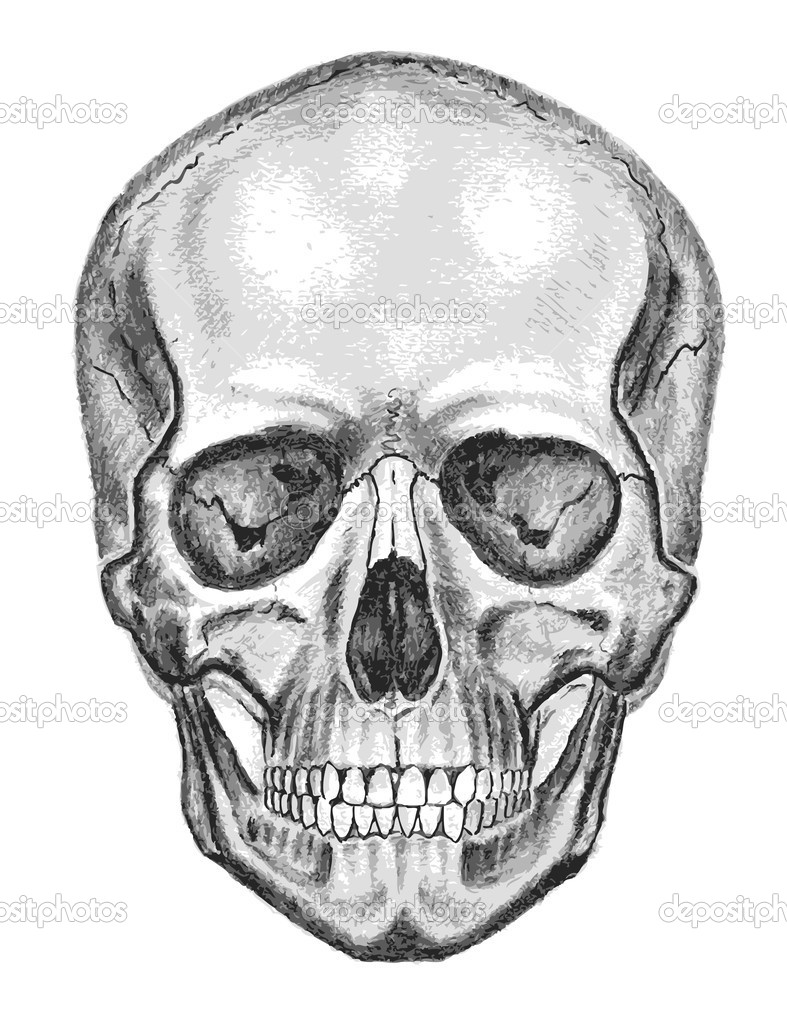 Skull. Trace, don't easy edit — Stock Vector #9335427