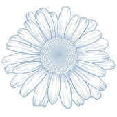 Vector daisy. — Stock Photo