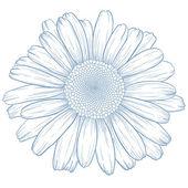 Vector daisy. — Stock Photo