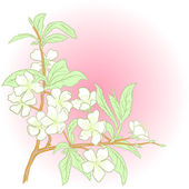 Vector cherry blossom. — Stock Vector