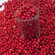 Stock Photo: Cowberries.