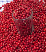 Cowberries. — Stock Photo