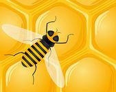 Bee en honingraat — Stockvector