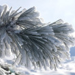 Winter plant - Stock Photo