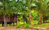 Capanna nella giungla — Foto Stock