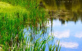 Pond And Water Plants — Stock Photo