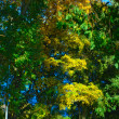 Green and Yellow Leaves - Foto de Stock