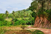 Road in Jungle — Stock Photo