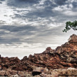 Rocky Shore — Stock Photo #9057802