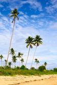 Tropic Jungle — Стоковое фото