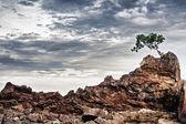 каменистый берег — Стоковое фото
