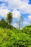 Thajské džungle — Stock fotografie
