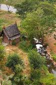 Boran mueang — Foto Stock