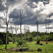 Dry Trees on Swamp — Stock Photo