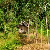 Thai Jungle — Stock Photo