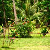 Thai Nature — Foto Stock