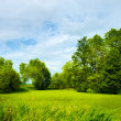 Sunny Meadow — Stock Photo #9354066