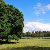 пейзажи лето — Стоковое фото