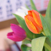 Spring tulips — Stock Photo