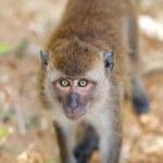 Macaque Monkey — Stock Photo #9817006