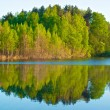 Forest on a Lake — Stock Photo