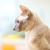 Hairless Cat — Stock Photo