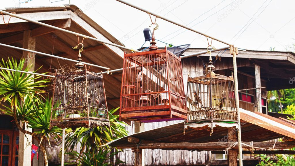 Birds in a cages in traditional thai village — Stock Photo #9939647