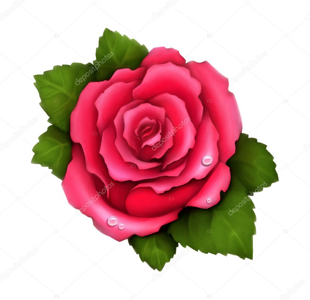 Illustration of pink rose  — Stock Photo #10456895