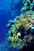 Group of coral fish water. — Foto Stock