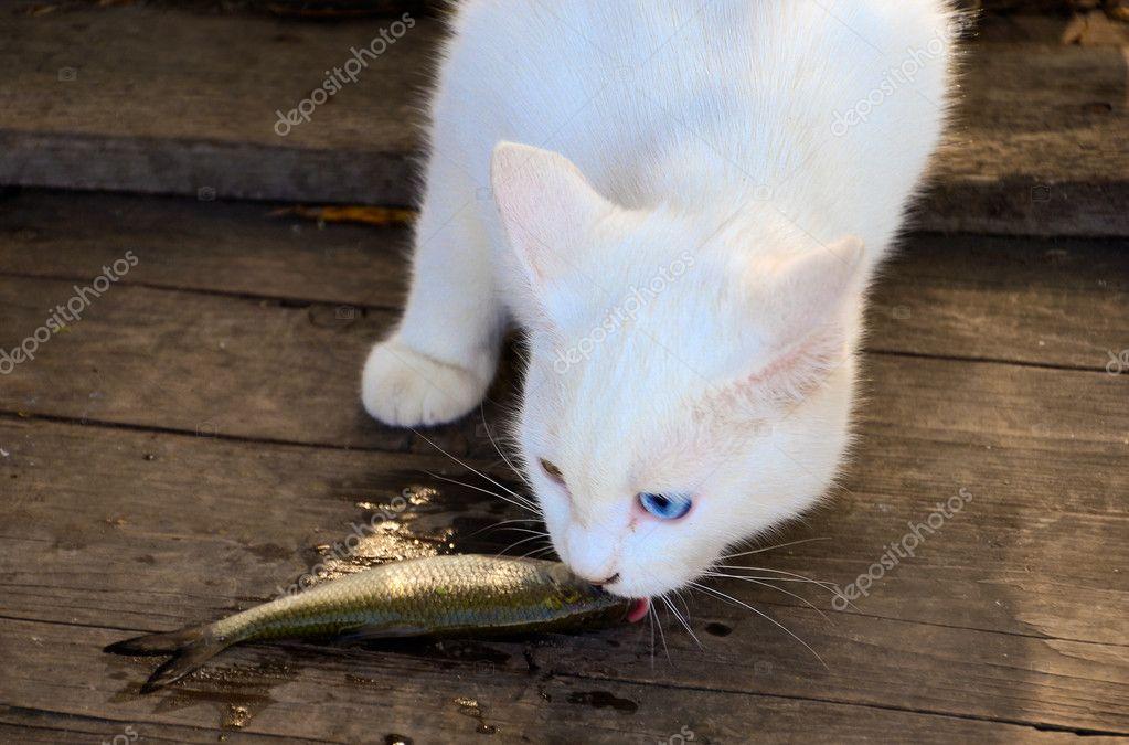 Как едят белые кошки