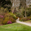 Stock Photo: Garden path between shrubbery of azaleas