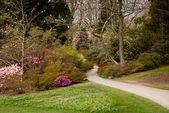 Garden path between shrubbery of azaleas — Stock Photo