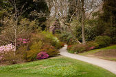 Garden path between shrubbery of azaleas — Stock Photo