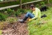 Леди садовник, потянув вверх сорняки в клумбу — Стоковое фото