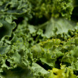 Stock Photo: Macro shot of Kale