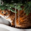 Stock Photo: Bengal cat under Christmas tree