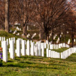 Xmas wreaths in Arlington Cemetery — Stock Photo