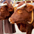 Two oxen in yoke pulling a cart — Stock Photo