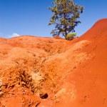 Single bush in dry red rocks — Stock Photo #8869818