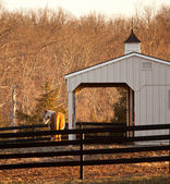 Horse in paddock by stable at sunset — Foto Stock