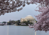 Floodlit Jefferson Memorial and cherry blossom — Stock Photo