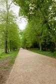 Kornik Arboretum — Stock Photo